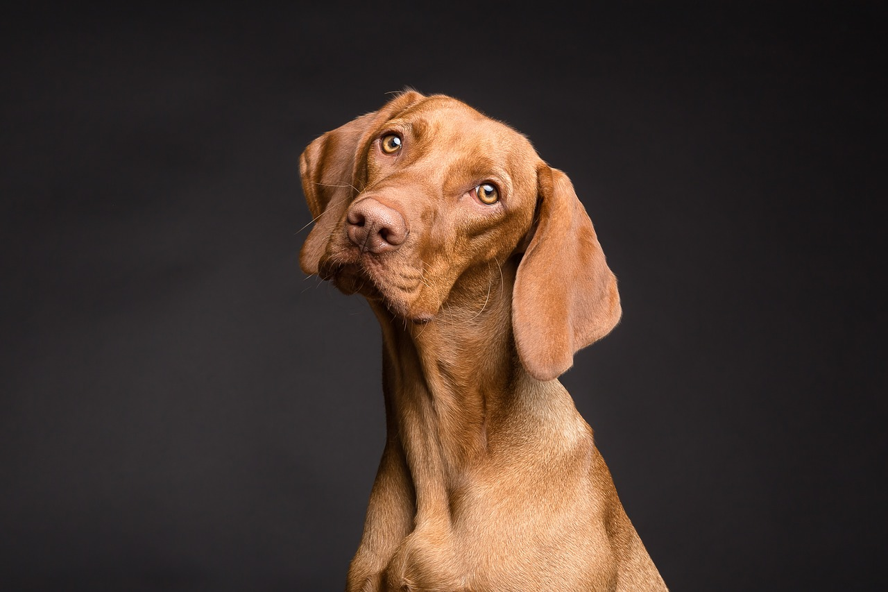 איך לבחור כלוב אילוף לכלב?